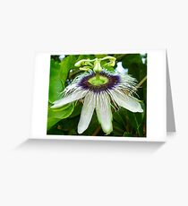 Passion fruit flower - St Martin, NA Greeting Card
