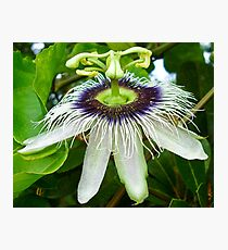 Passion fruit flower - St Martin, NA Photographic Print