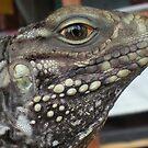 Lizard in Cuba by karenkirkham