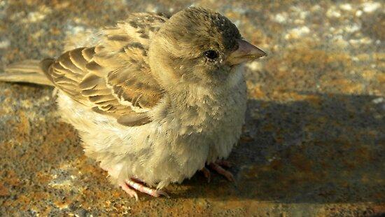 Tierische Tarnung - Little Bird by TCL-Cologne