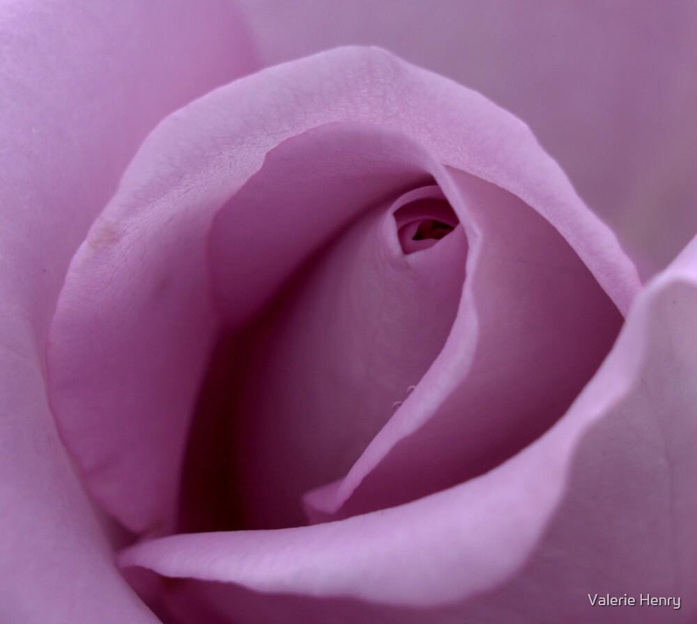 Mauve Rose Bud. by Valerie Henry
