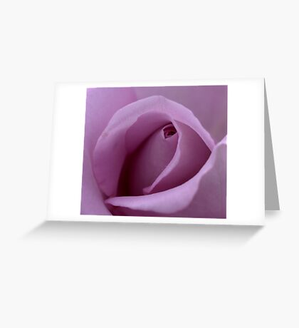Mauve Rose Bud. Greeting Card