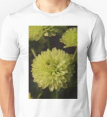 Green Chrysanthanum Closeup T-Shirt