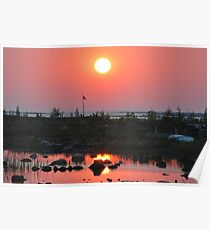 Sunset at Oliphant, Ontario Poster