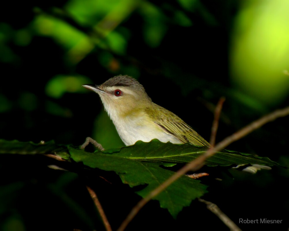 Red Eye Beauty in The Deep Dark Forest by Robert Miesner
