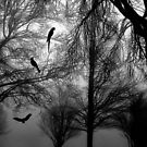 In the Darkness © by Dawn Becker