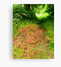Fragrant Pathway Through the Forest Canvas Print