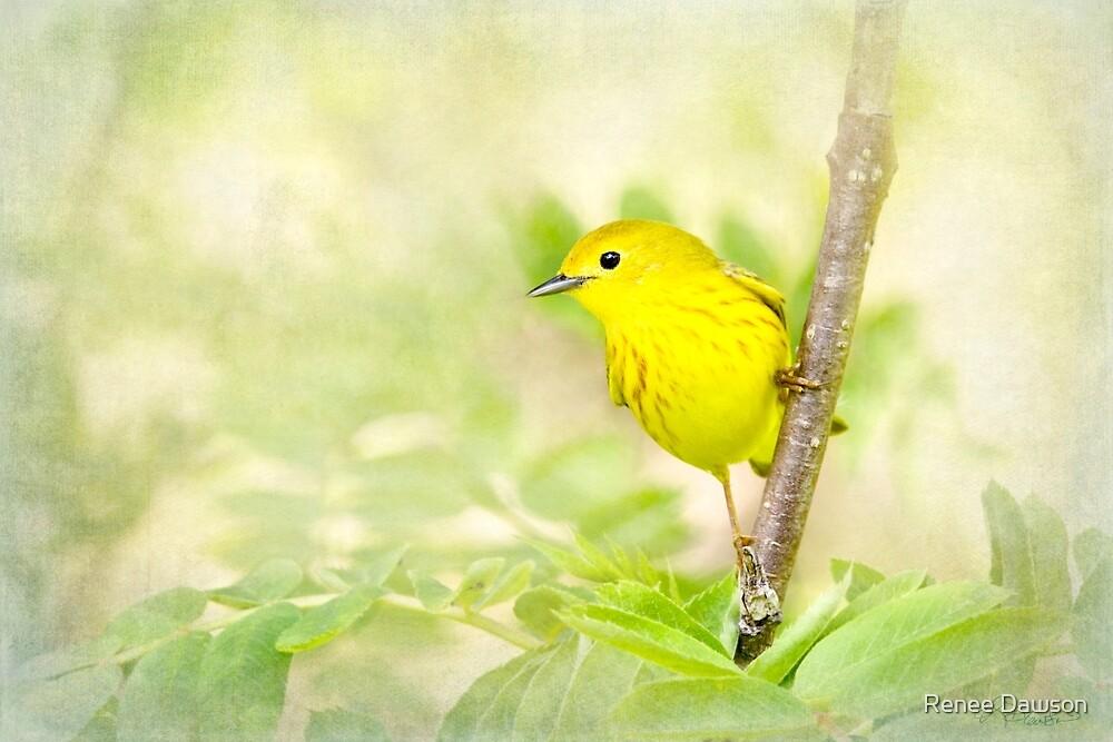 Yellow Warbler - Songbird Art by Renee Dawson