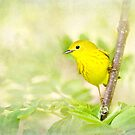 Yellow Warbler - Songbird Art by Renee Dawson