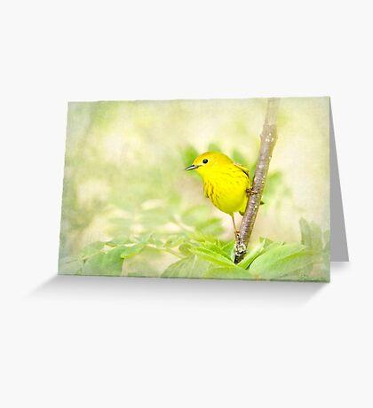 Yellow Warbler - Songbird Art Greeting Card