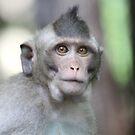 Wise Monkey by byronbackyard