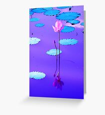 Sunset Colors Reflected On The Lily Pond Greeting Card