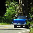 sunday drive through the redwoods by Jeannie Peters
