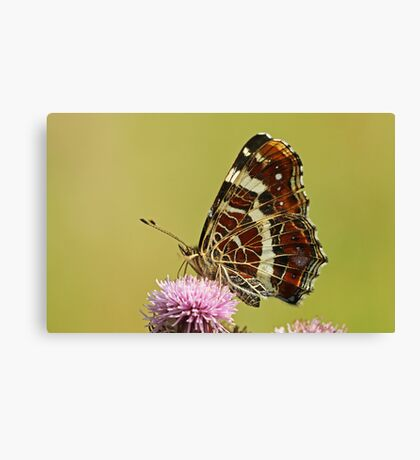 The Map Butterfly Canvas Print