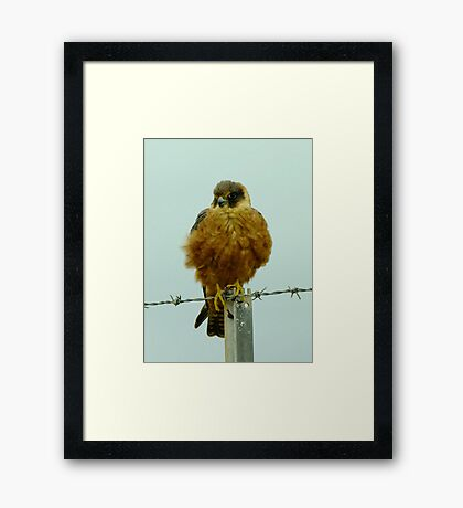 Just holding on - Great Ocean Road, Victoria Framed Print