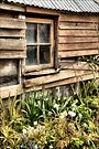 Garden Shed by Vicki73