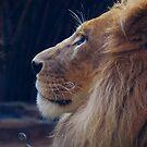 Majestic creature by Catherine Davis