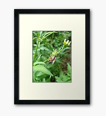 So, Bella, let me see your pretty underpinnings... Framed Print