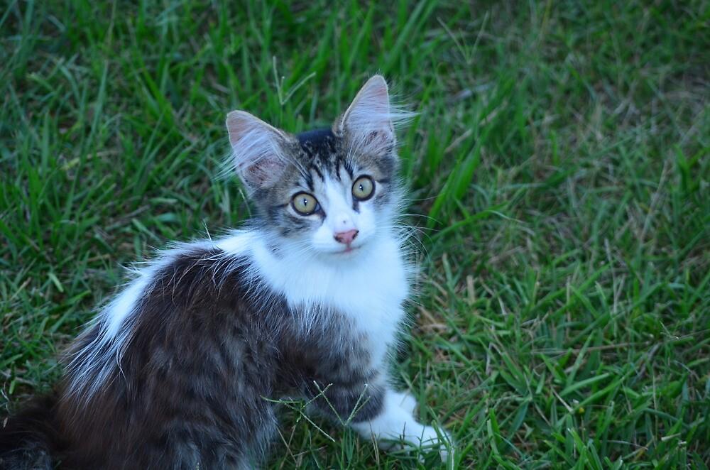 kitten  by djthornton1
