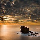 Charlies garden dawn light by Michael Ridley
