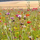 Champ des Fleurs by Anna Sobert
