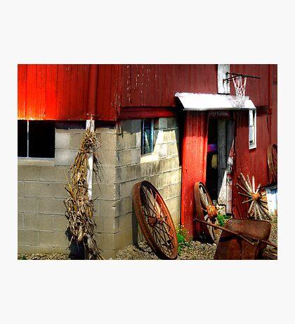 Fun on the Farm Photographic Print