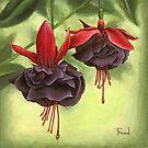 Fuchsia by tanyabond