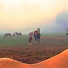 Horse Back - HDR by WTBird