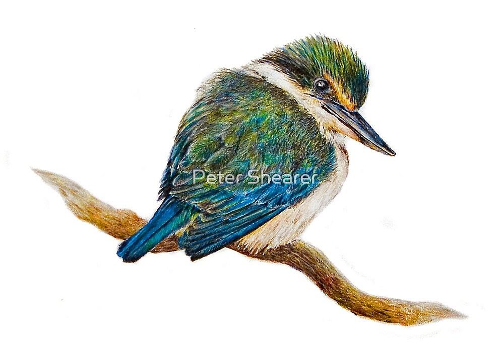 Kingfisher 11. 2010 by Peter Shearer