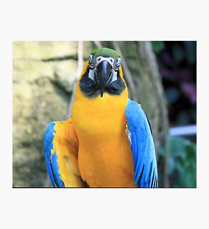 Yellow Belly Photographic Print