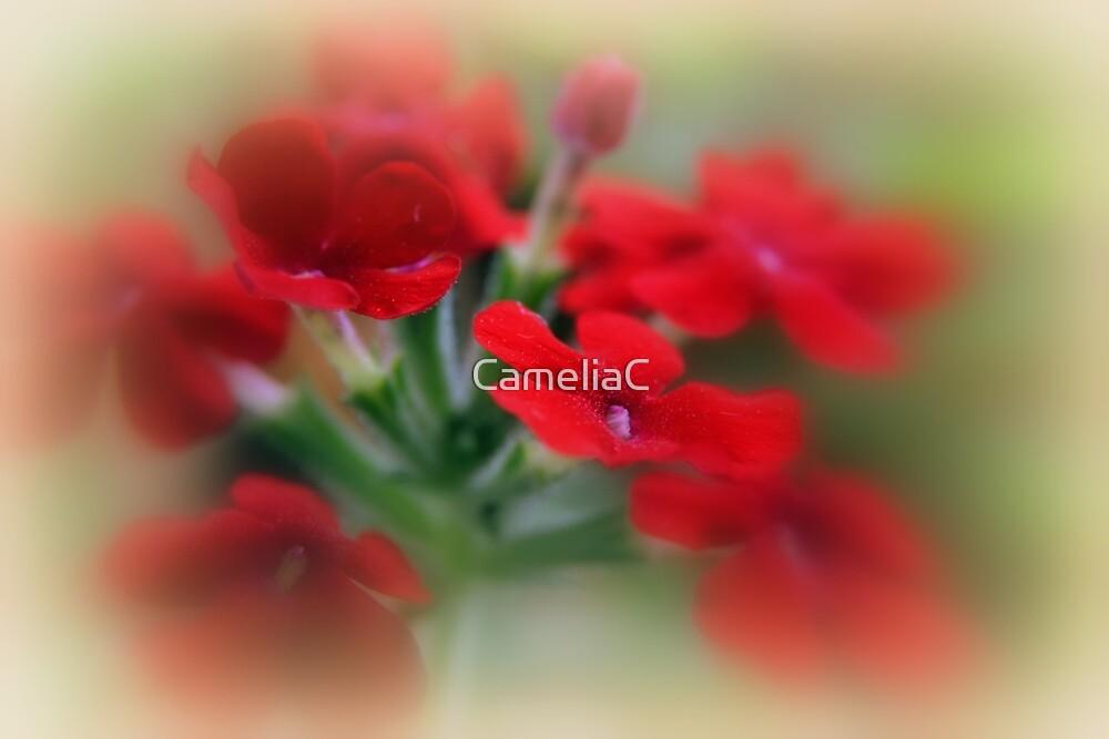 Red Verbena by CameliaC