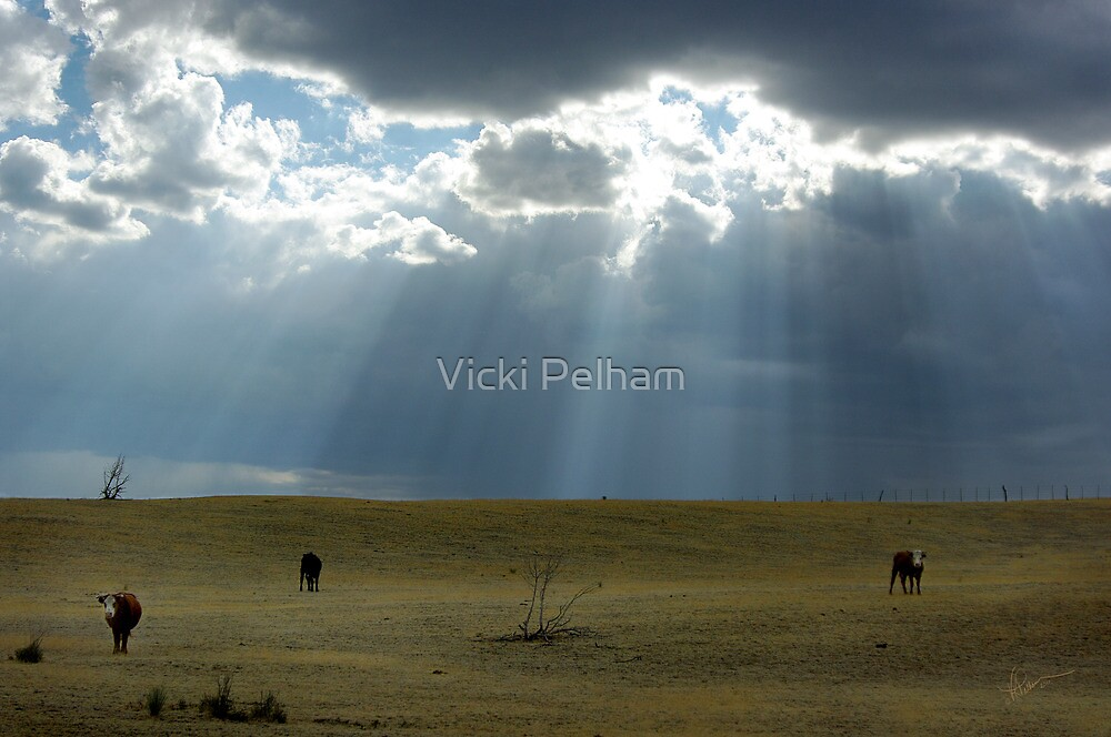 Open Range by Vicki Pelham
