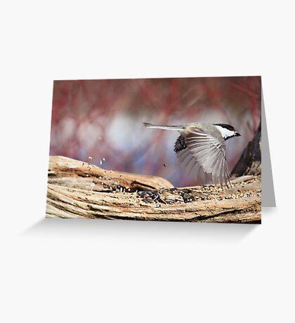 Fly thru - Drive thru Chickadee Greeting Card