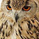 Jambs Parliament of Owls, Israeli Eagle Owl by Terry Senior