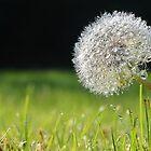 Dandy Dew by relayer51