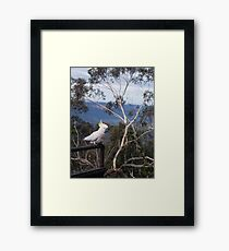 cockatoo blue mountains, Australia Framed Print