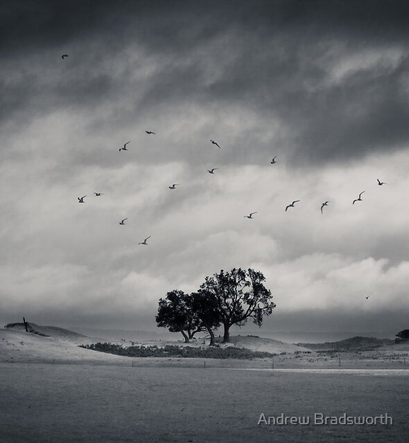 before the storm by Andrew Bradsworth