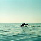 Whale von Julia Aufschnaiter