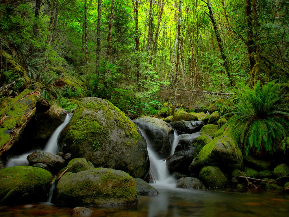 Canyon Creek Spring Runoff by Charles & Patricia   Harkins ~ Picture Oregon