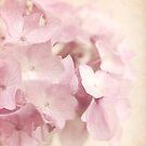 Pink Hydrangeas by Beth Mason