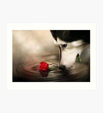 Dog with Rose  Art Print