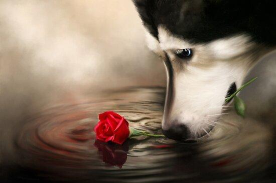 Dog with Rose  by Renee Dawson