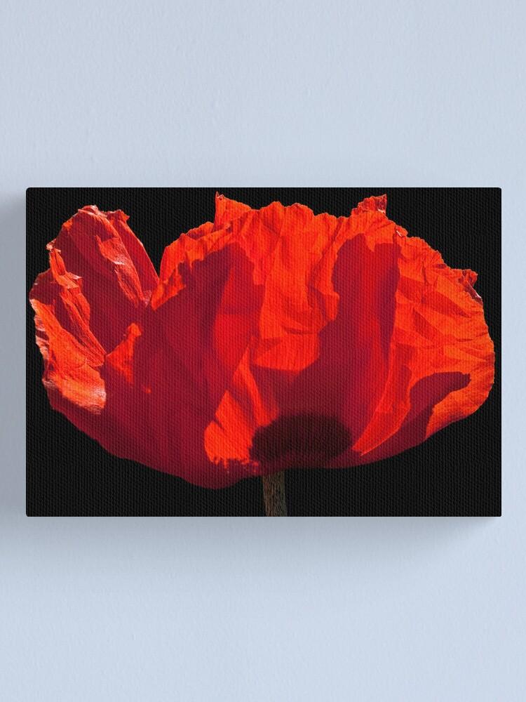 Alternate view of Sunlit Poppy Canvas Print