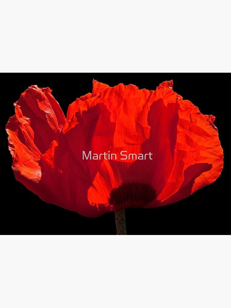 Sunlit Poppy by MartinSmart