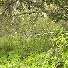 Old Oak Undergrowth by Sandra Gray