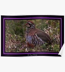 The Red Legged Partridge Poster