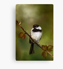 Autumn Chickadee Painting Canvas Print