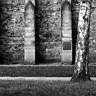 Silver Birch Nottingham Castle by DelayTactics