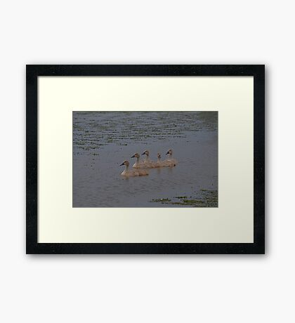 And Then There Were Five. Framed Print