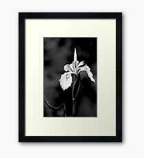 Wild Iris - Black & White Photo Painting Framed Print